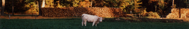 Fall Cow by DFF