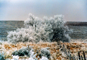 Rime Ice in Arizona